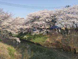 20180409桜橋5.jpg