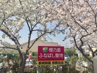 20180409桜看板.jpg