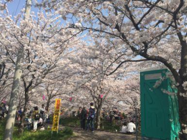 20180409桜.jpg