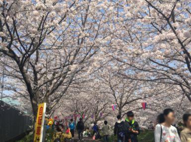 20180409桜2.jpg
