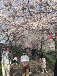 20180409桜3.jpg