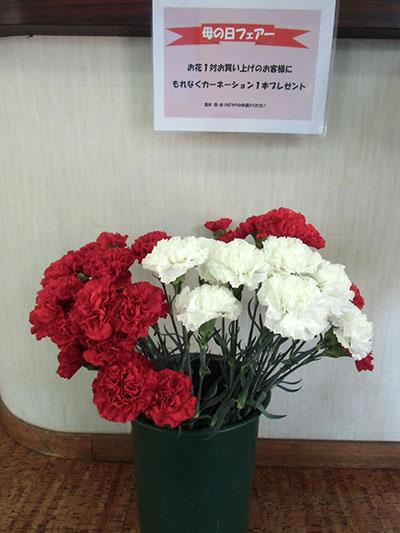 ichikawa20170508d.jpg