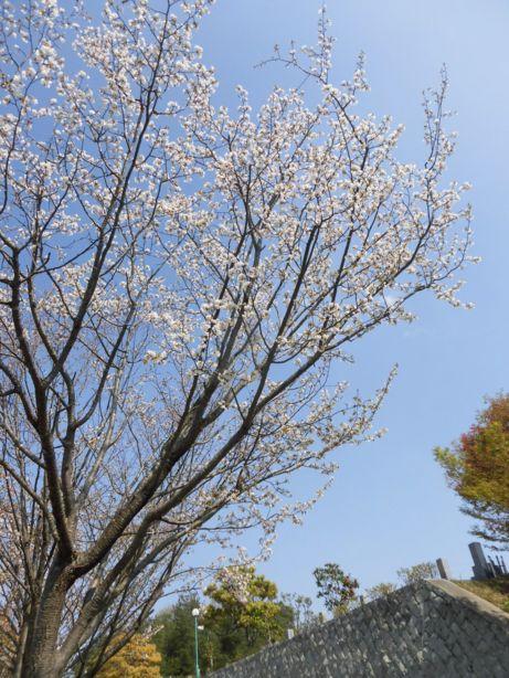 koubeseichi20190422a.JPG