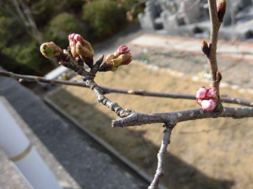 koubeseichi20200323e.jpg