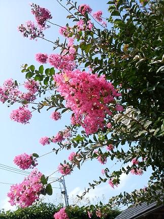 sarusuberi20190804d.jpg
